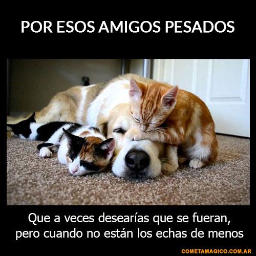 Imagenes Con Frases X El Dia Amigo 137 Frases De Amistad